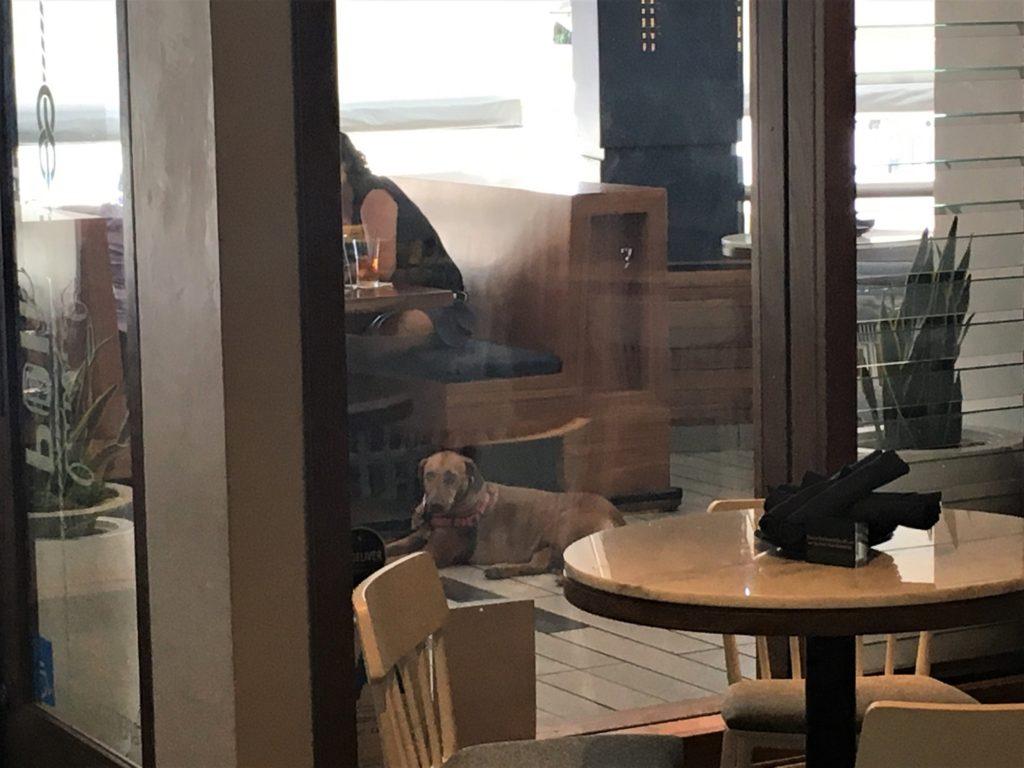 Dog Friendly Patio Area